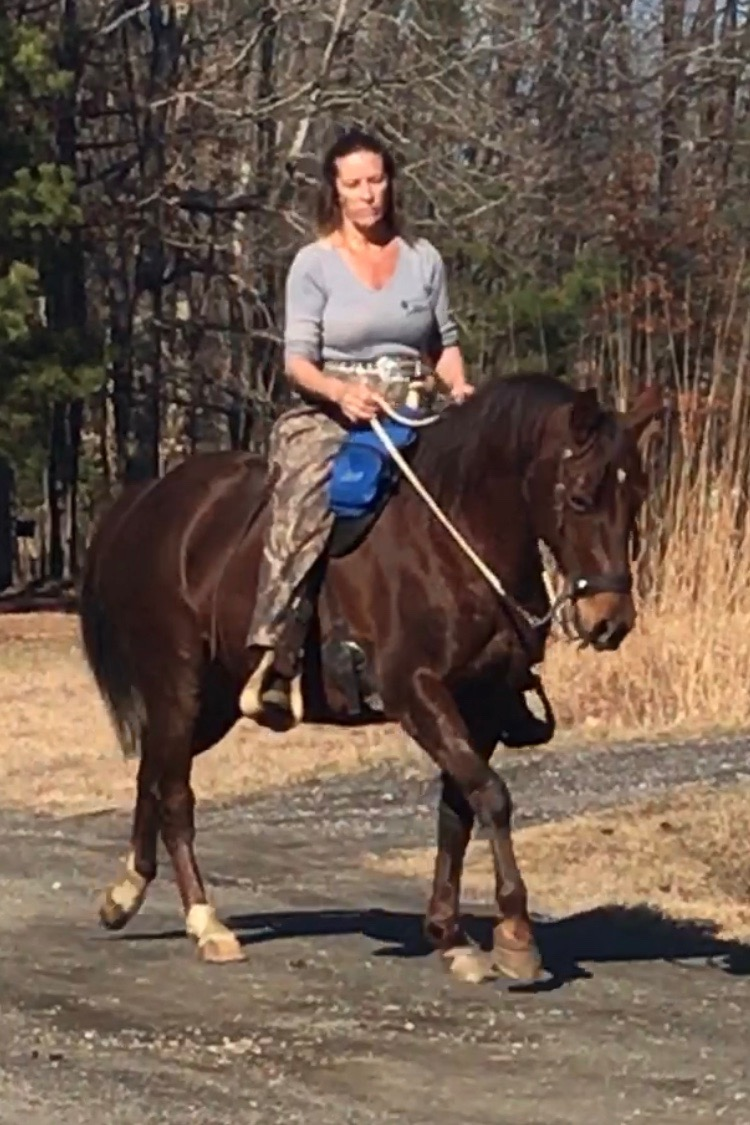 Trail Horse for Sale in Raleigh, NC