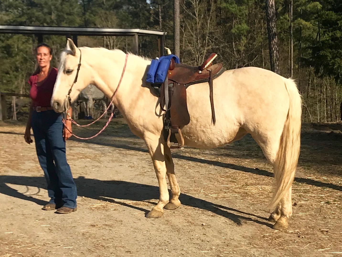 chasity saddled