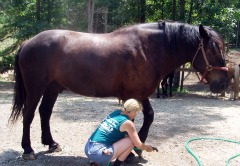 Rescue Horse Getting a Bath