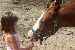 Girl Feeding Horse a Carrot
