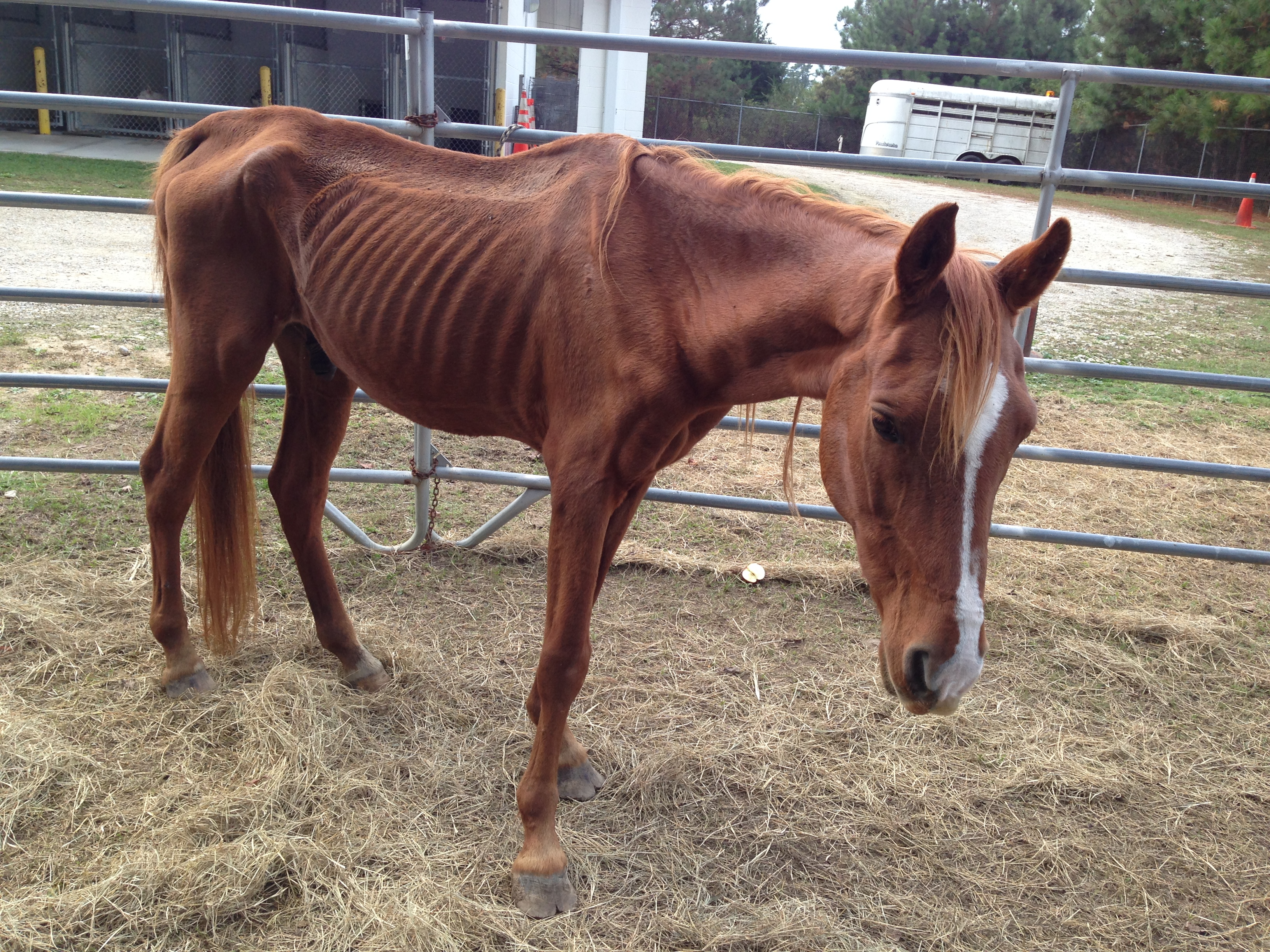 Latest Horse Rescue