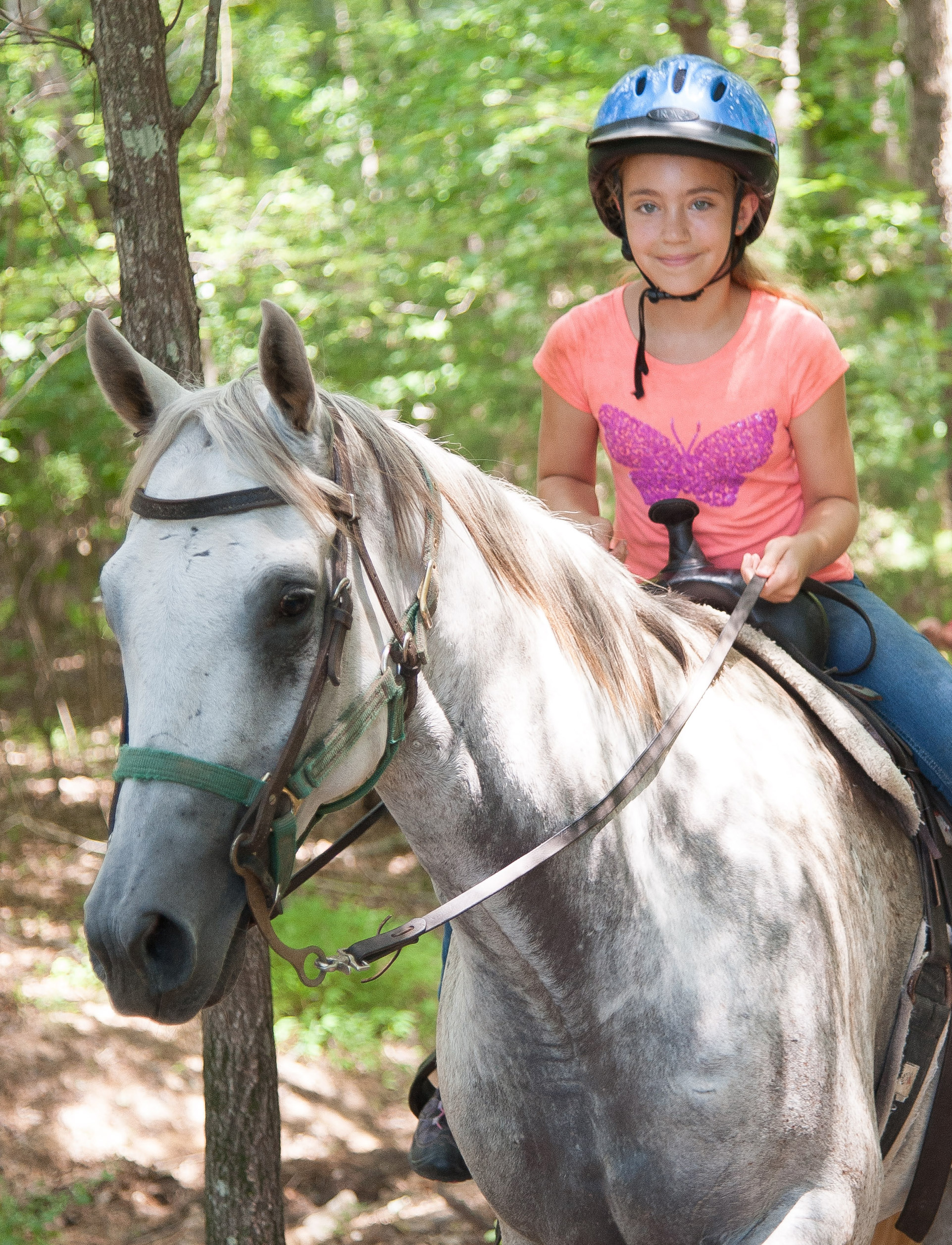 Appendix Quarter Horse Gelding for Sale in Raleigh, NC