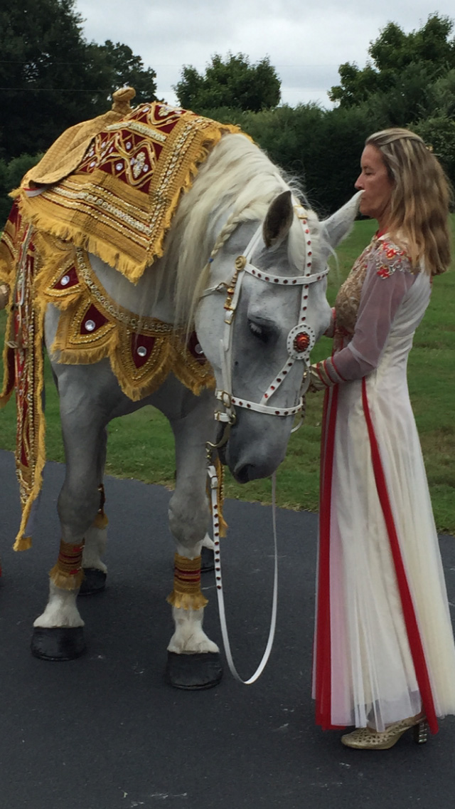 White Horse for Wedding