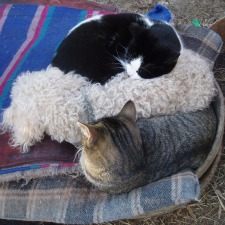 Dogs and Cats in Horse Feed Pan