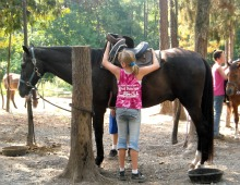 Learning to Saddle a Horse